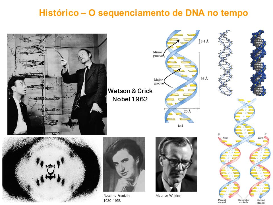 Histórico – O sequenciamento de DNA no tempo