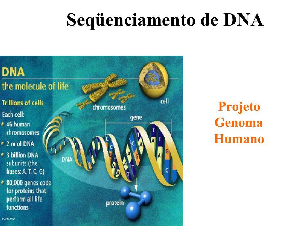 Seqüenciamento de DNA Projeto Genoma Humano