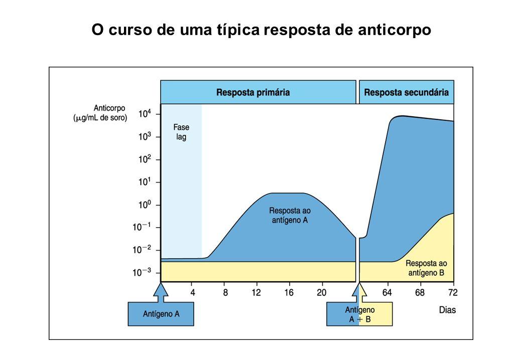 O curso de uma típica resposta de anticorpo