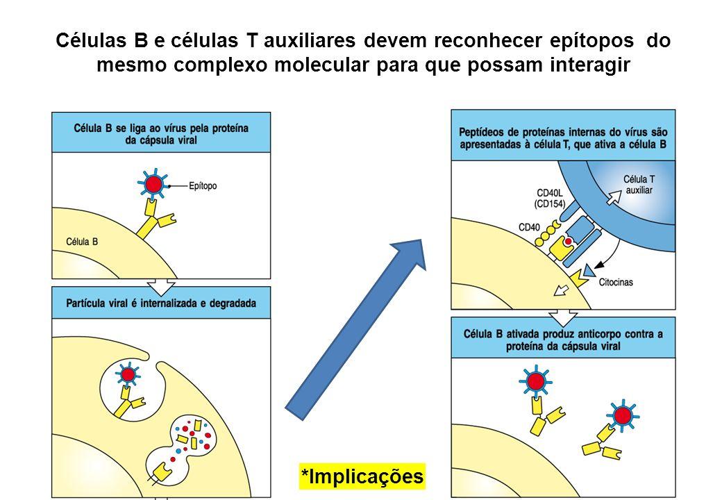 Células B e células T auxiliares devem reconhecer epítopos do mesmo complexo molecular para que possam interagir