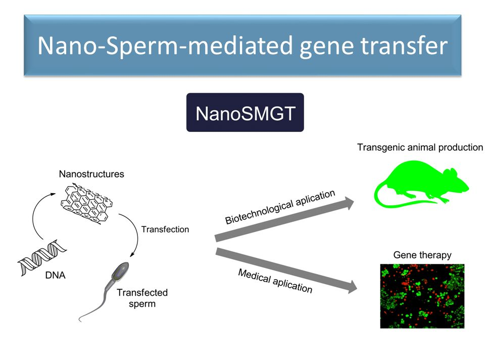 Nano-Sperm-mediated gene transfer