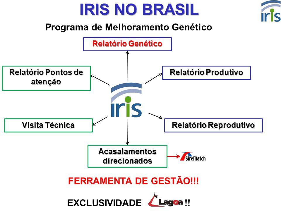IRIS NO BRASIL Programa de Melhoramento Genético