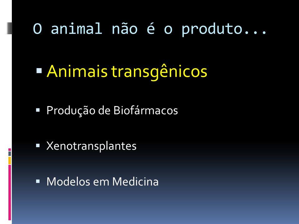 Animais transgênicos O animal não é o produto...
