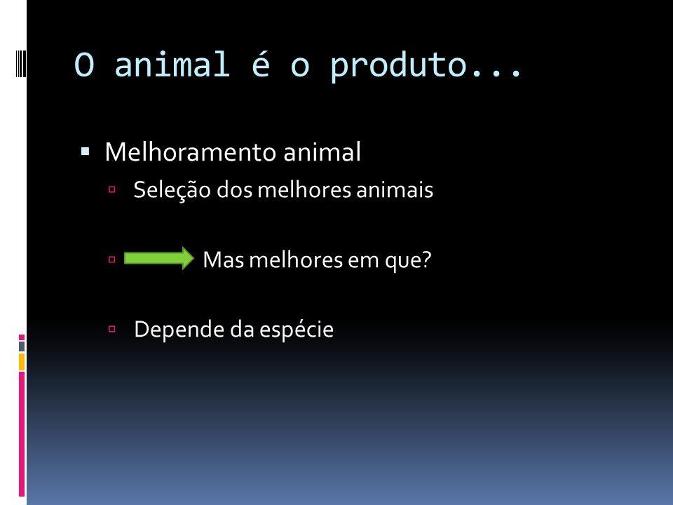 O animal é o produto... Melhoramento animal