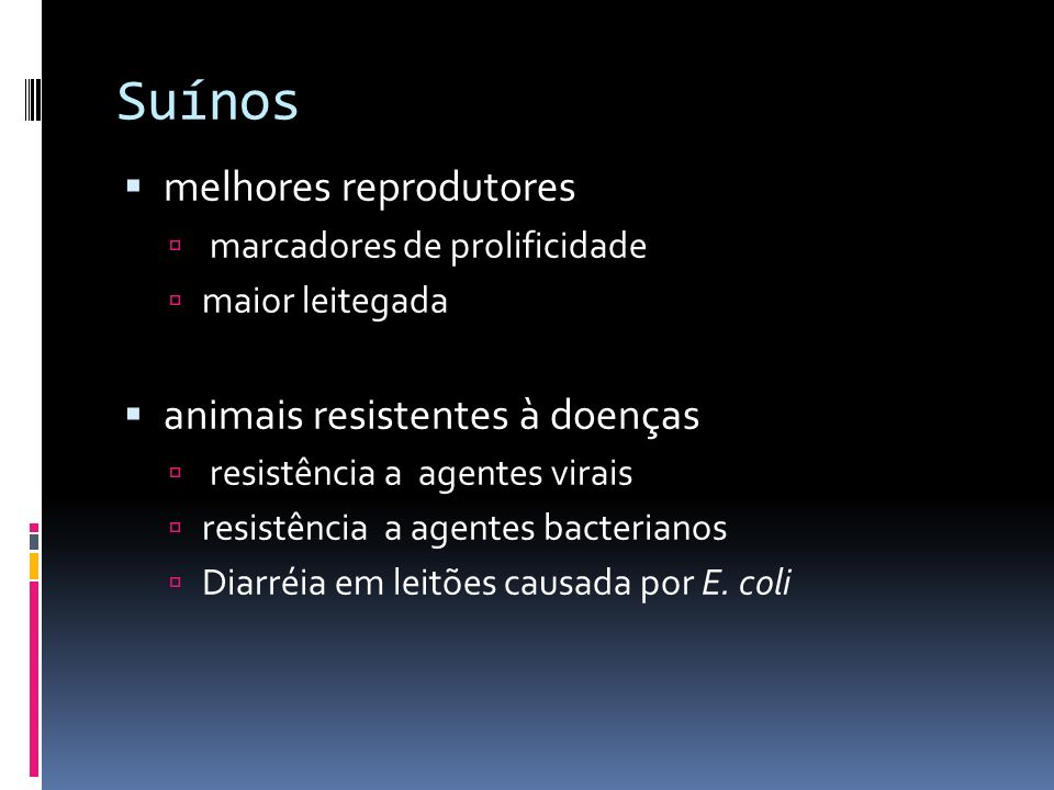 Suínos melhores reprodutores animais resistentes à doenças