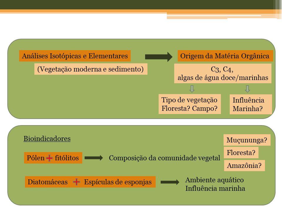 algas de água doce/marinhas
