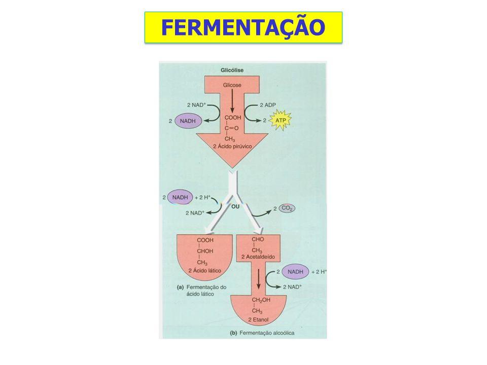 FERMENTAÇÃO
