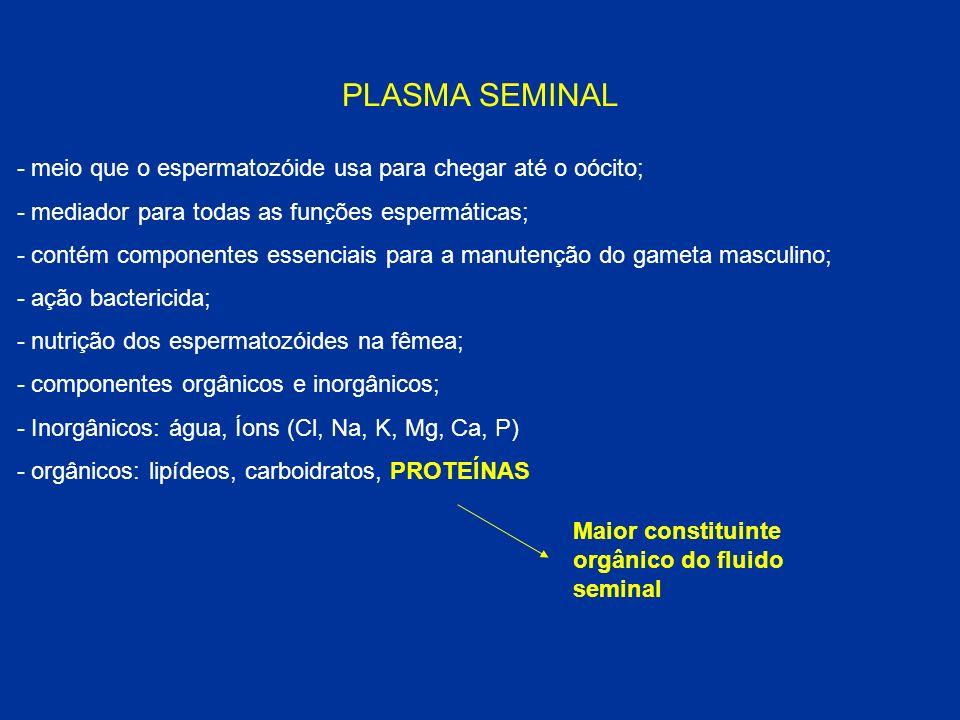 PLASMA SEMINAL - meio que o espermatozóide usa para chegar até o oócito; - mediador para todas as funções espermáticas;