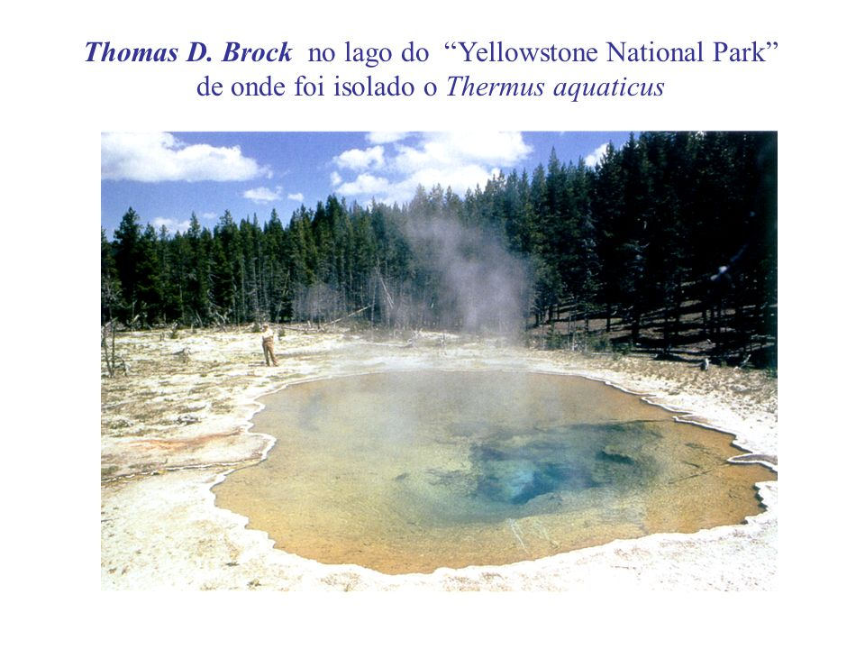 Thomas D. Brock no lago do Yellowstone National Park