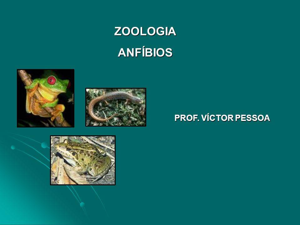 ZOOLOGIA ANFÍBIOS PROF. VÍCTOR PESSOA
