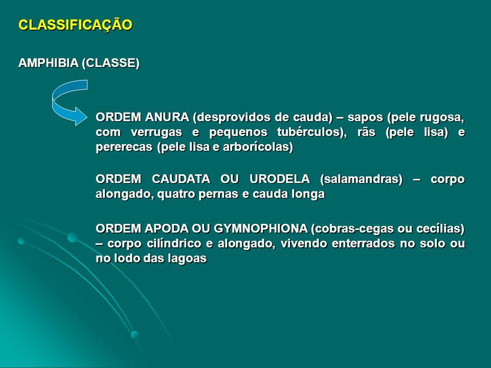 CLASSIFICAÇÃO AMPHIBIA (CLASSE)