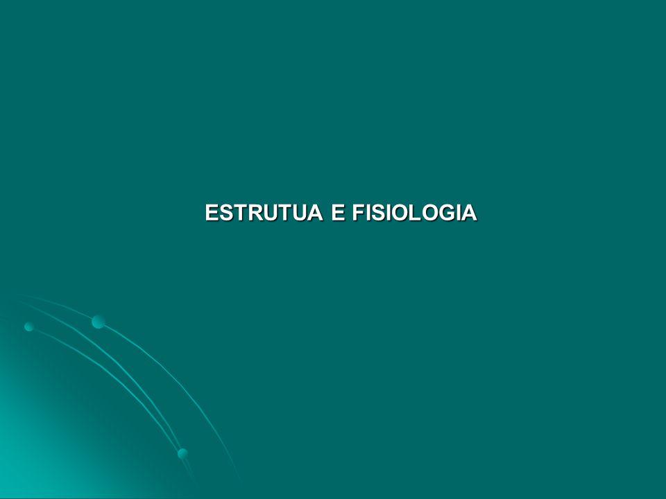 ESTRUTUA E FISIOLOGIA