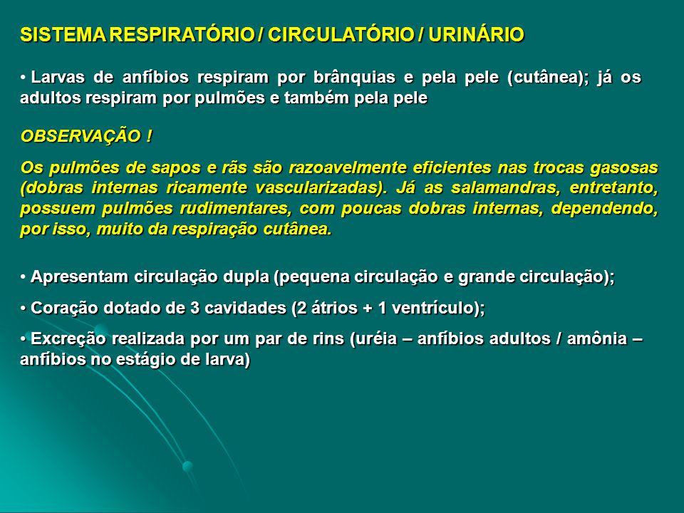 SISTEMA RESPIRATÓRIO / CIRCULATÓRIO / URINÁRIO