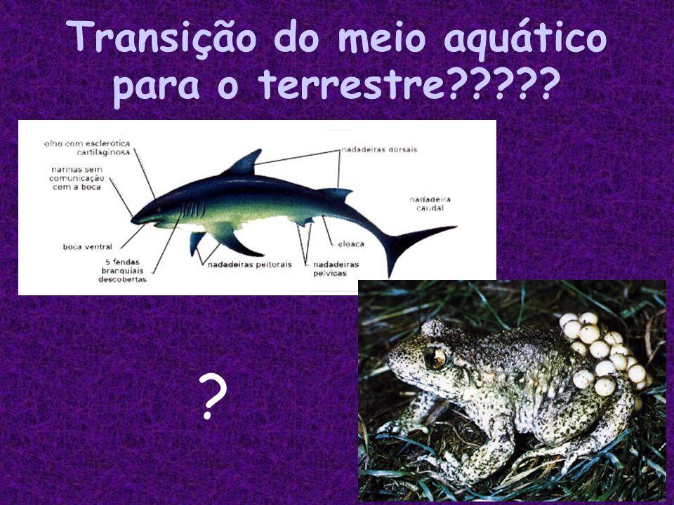 Transição do meio aquático para o terrestre