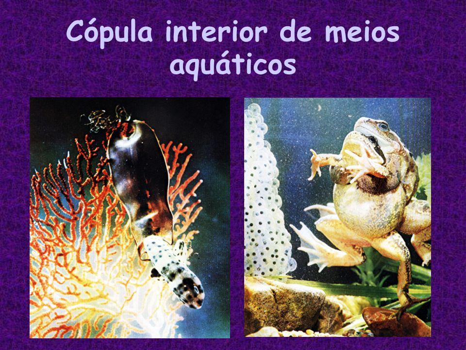 Cópula interior de meios aquáticos