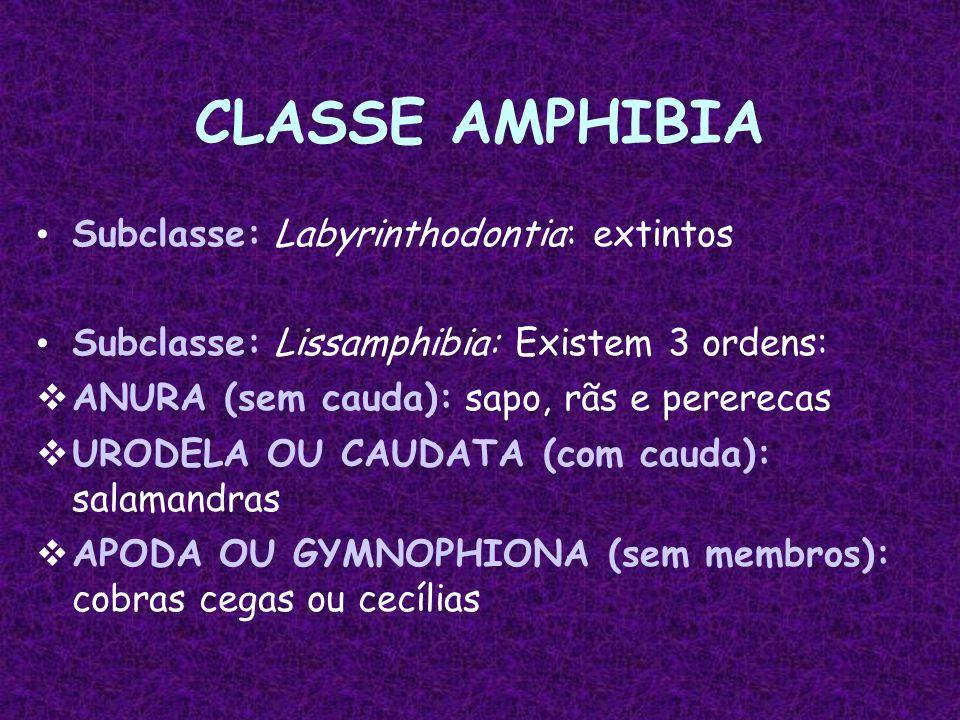 CLASSE AMPHIBIA Subclasse: Labyrinthodontia: extintos