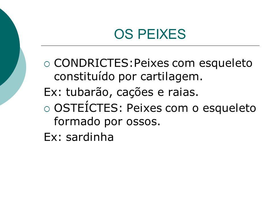 OS PEIXES CONDRICTES:Peixes com esqueleto constituído por cartilagem.