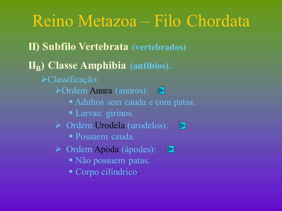 Reino Metazoa – Filo Chordata