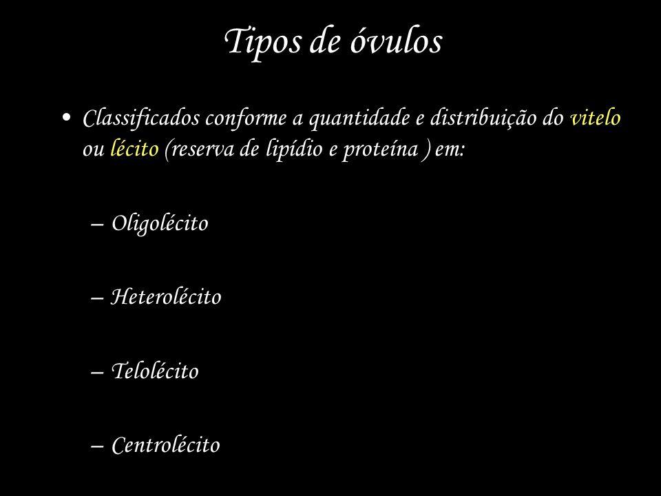 Tipos de óvulos Classificados conforme a quantidade e distribuição do vitelo ou lécito (reserva de lipídio e proteína ) em: