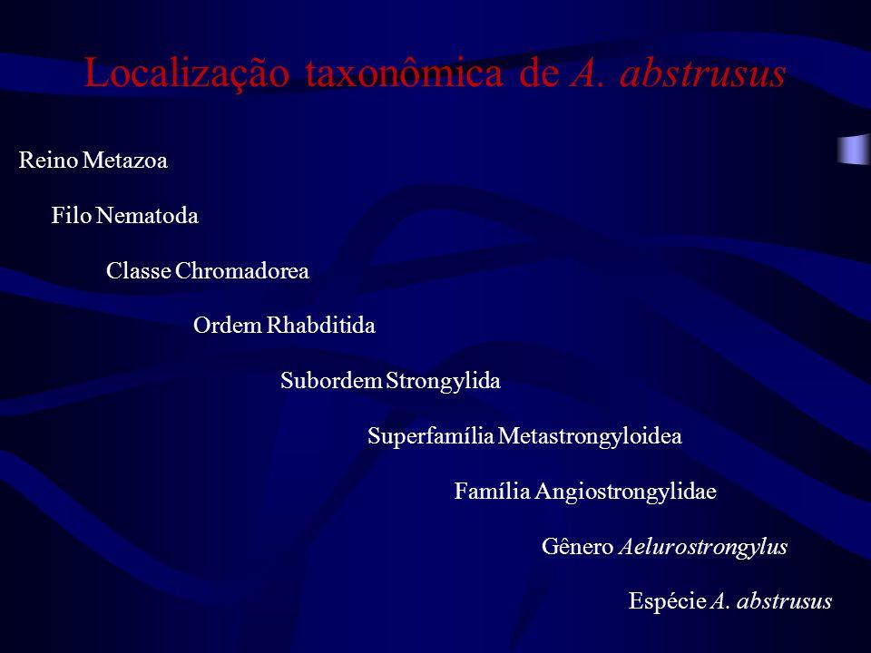 Localização taxonômica de A. abstrusus