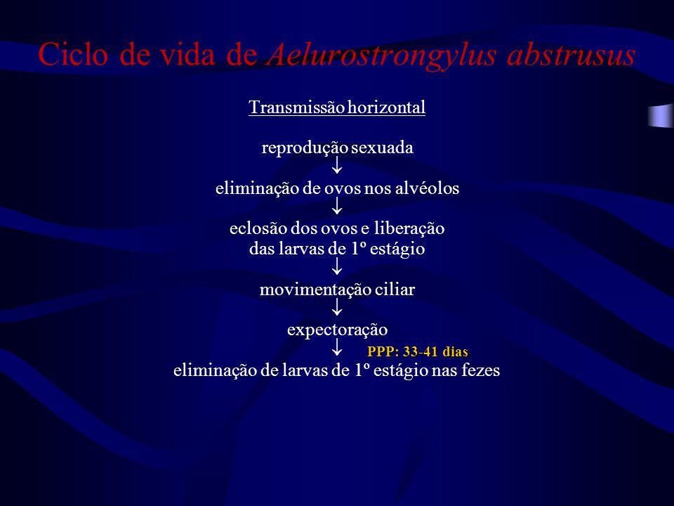Ciclo de vida de Aelurostrongylus abstrusus