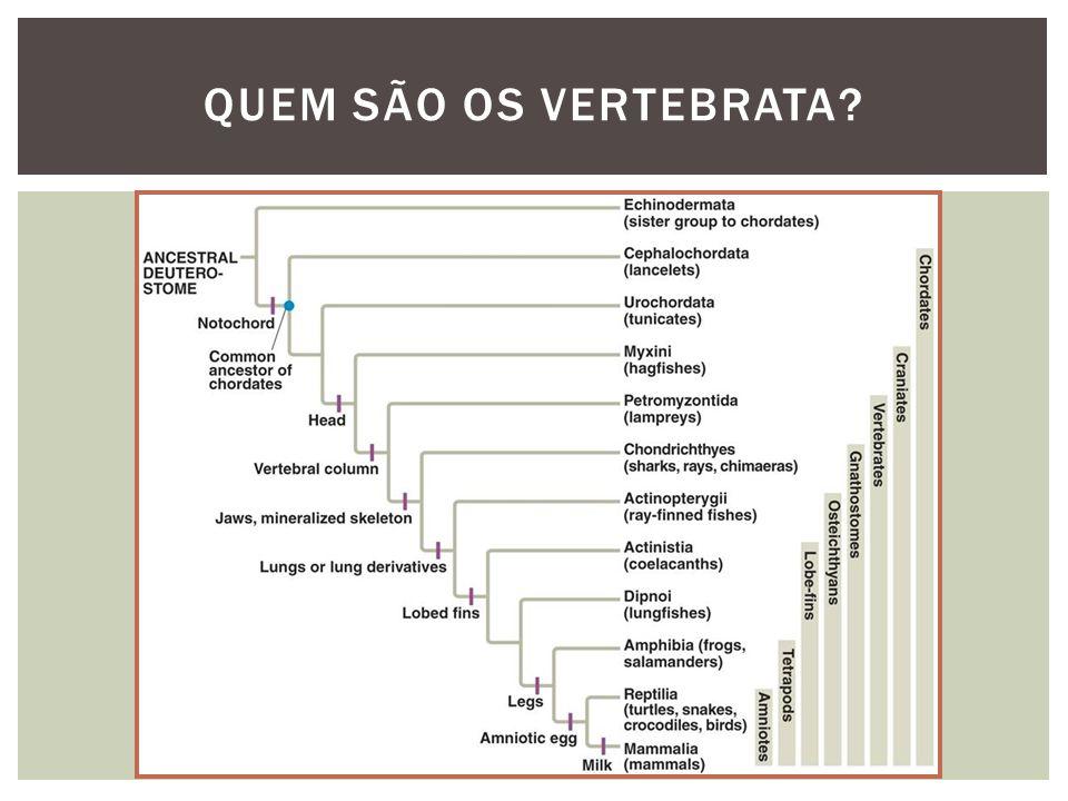 QUEM SÃO OS VERTEBRATA