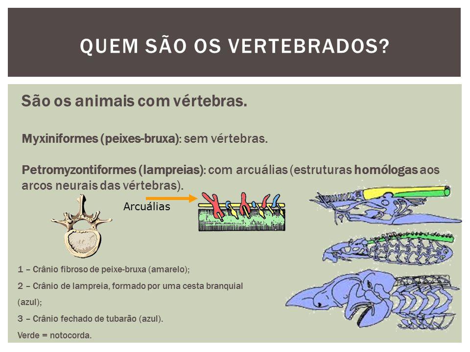 QUEM SÃO OS VERTEBRADOS