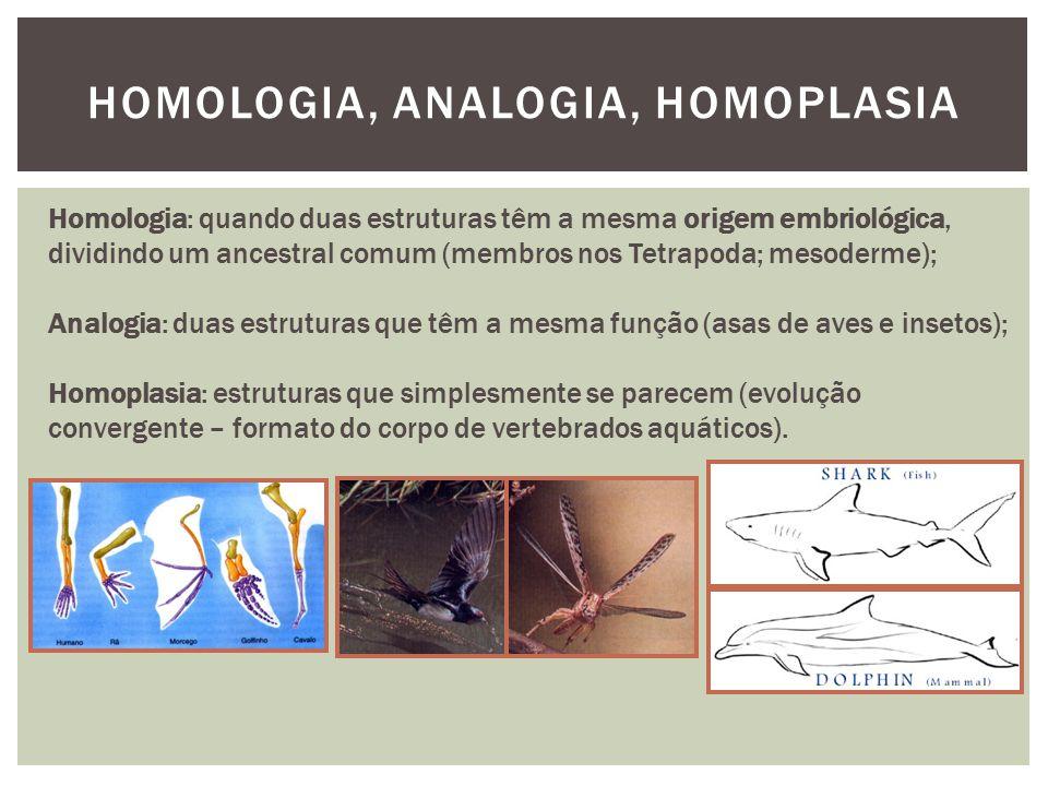 HOMOLOGIA, ANALOGIA, HOMOPLASIA