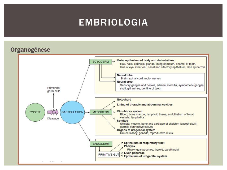 EMBRIOLOGIA Organogênese