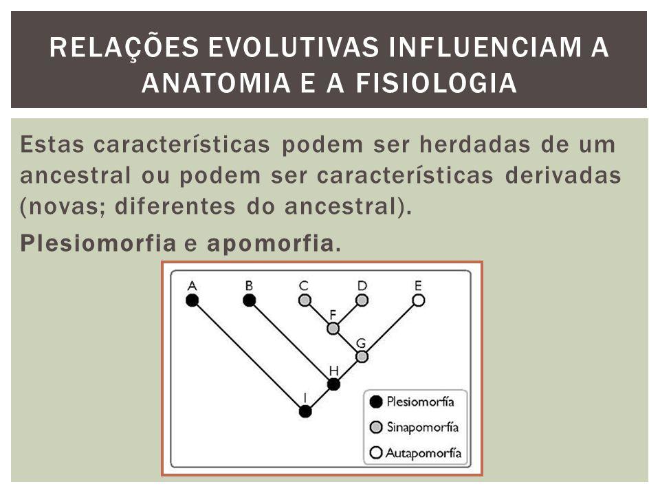 RELAÇÕES EVOLUTIVAS INFLUENCIAM A ANATOMIA E A FISIOLOGIA