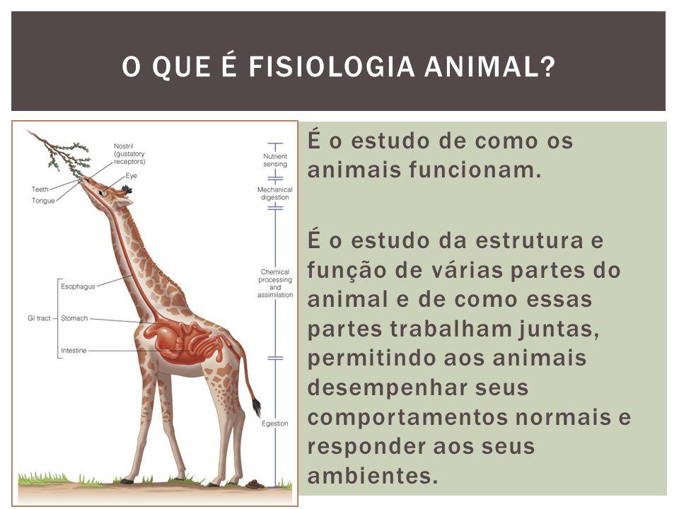 O QUE É FISIOLOGIA ANIMAL