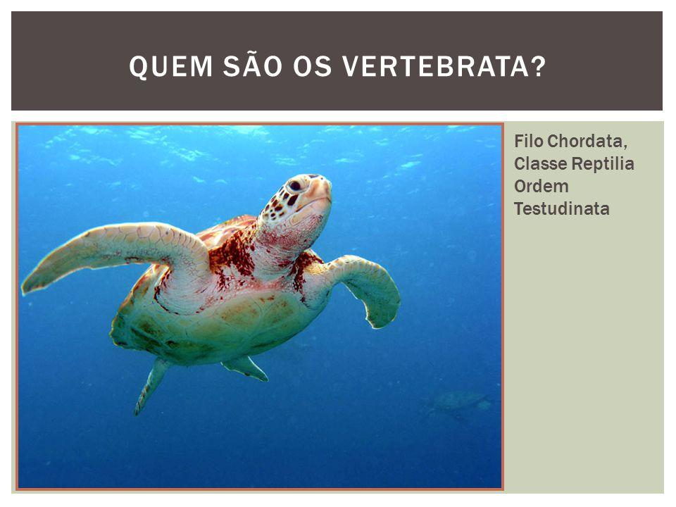 QUEM SÃO OS VERTEBRATA Filo Chordata, Classe Reptilia