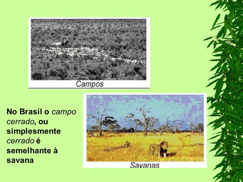 No Brasil o campo cerrado, ou simplesmente cerrado é semelhante à savana