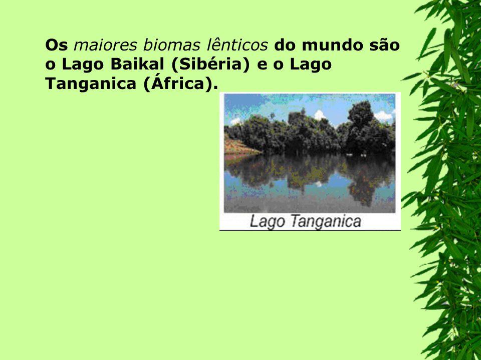 Os maiores biomas lênticos do mundo são o Lago Baikal (Sibéria) e o Lago Tanganica (África).