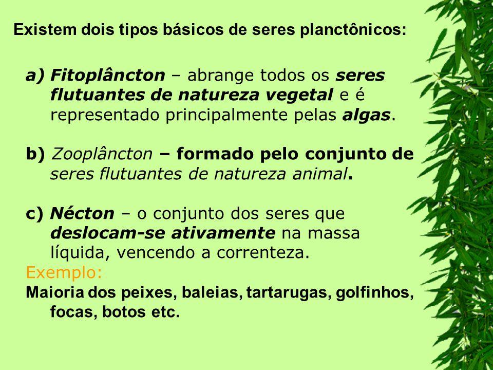 Existem dois tipos básicos de seres planctônicos: