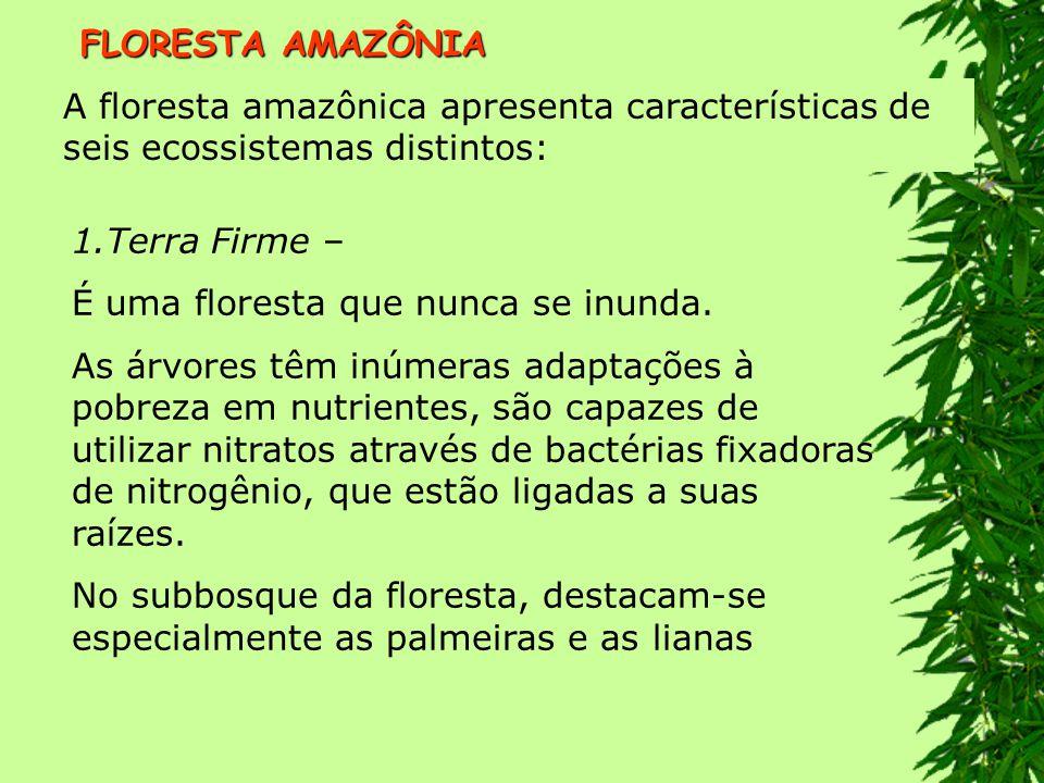 FLORESTA AMAZÔNIA A floresta amazônica apresenta características de seis ecossistemas distintos: Terra Firme –
