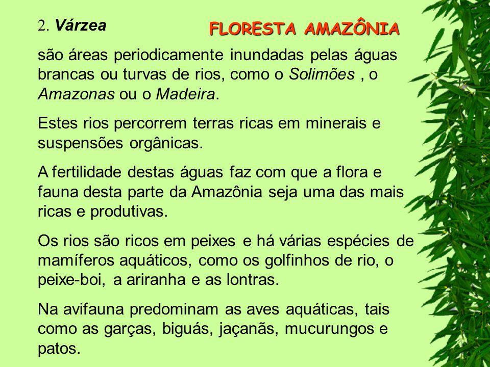 2. Várzea são áreas periodicamente inundadas pelas águas brancas ou turvas de rios, como o Solimões , o Amazonas ou o Madeira.
