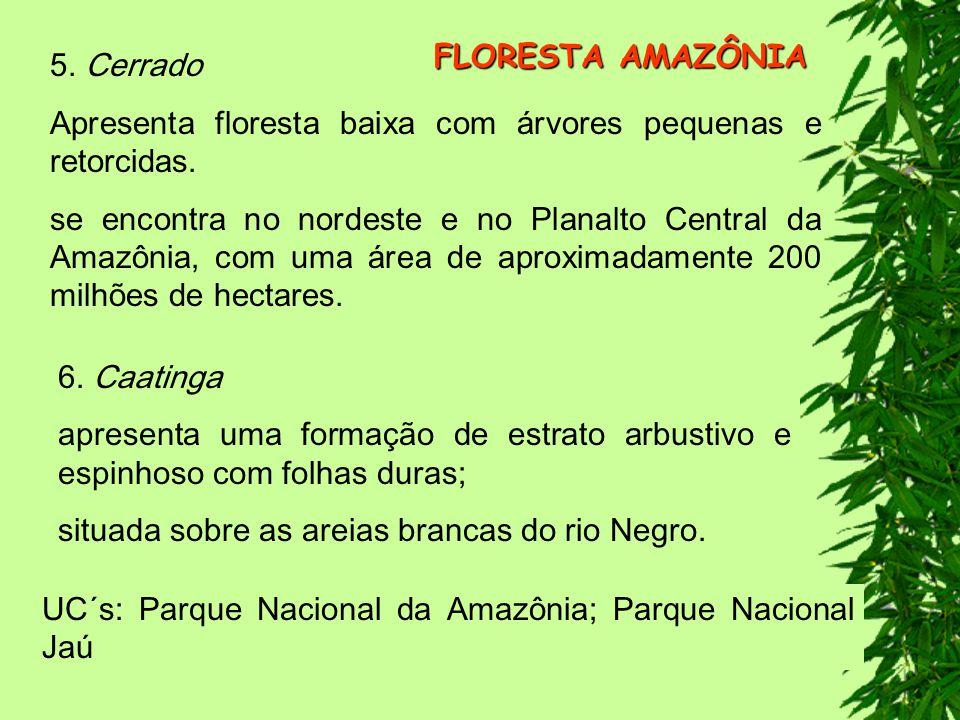FLORESTA AMAZÔNIA 5. Cerrado. Apresenta floresta baixa com árvores pequenas e retorcidas.