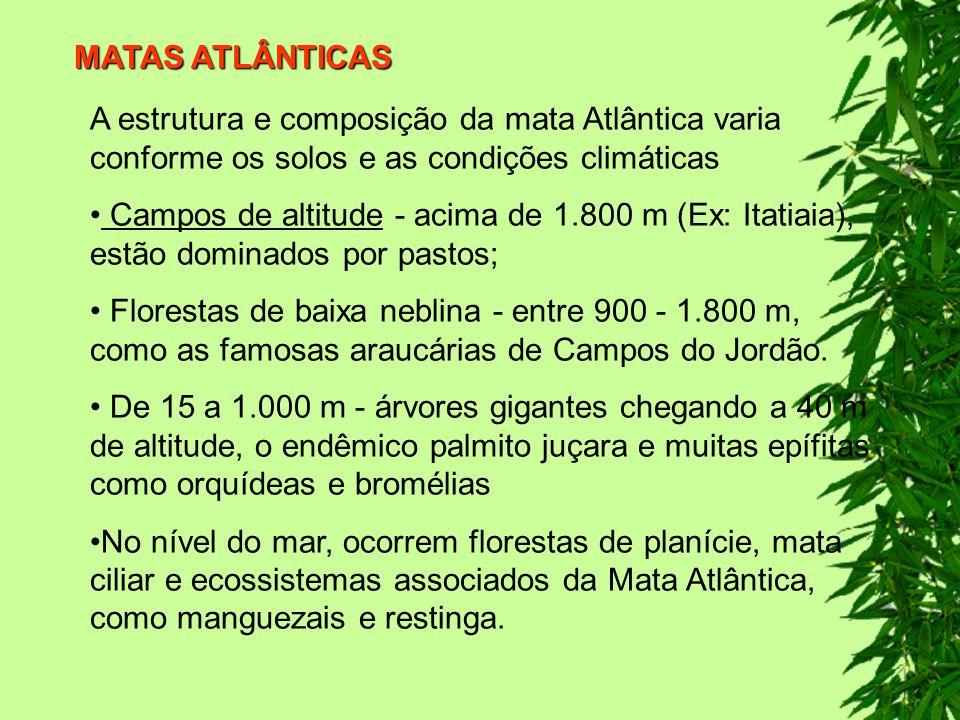 MATAS ATLÂNTICAS A estrutura e composição da mata Atlântica varia conforme os solos e as condições climáticas.