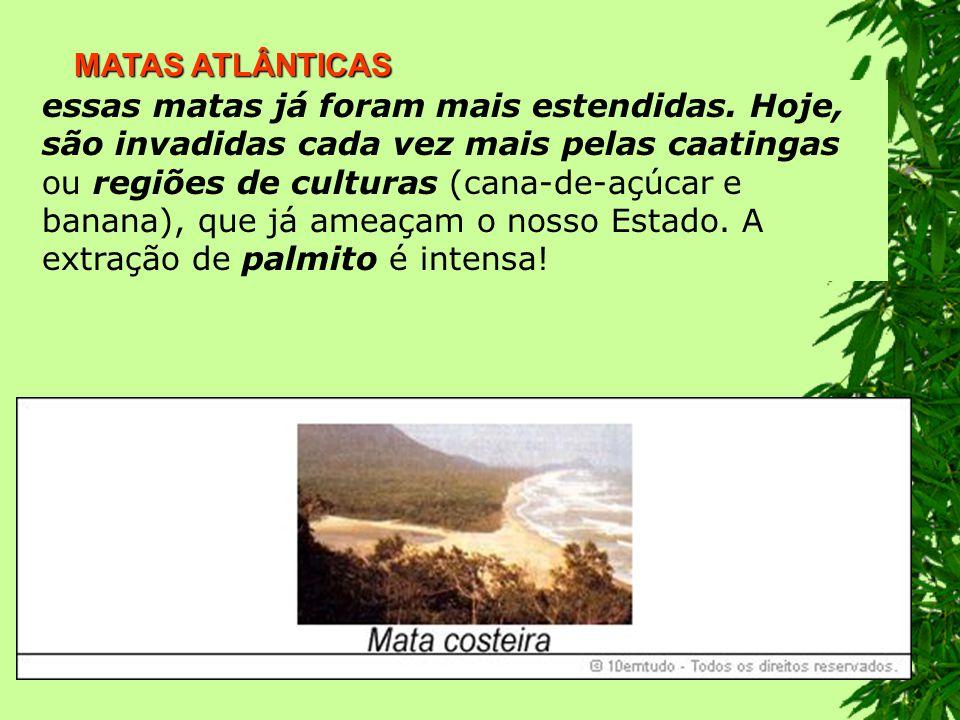 MATAS ATLÂNTICAS