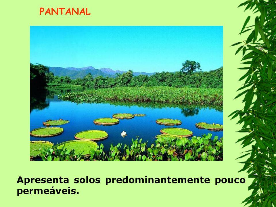 PANTANAL Apresenta solos predominantemente pouco permeáveis.