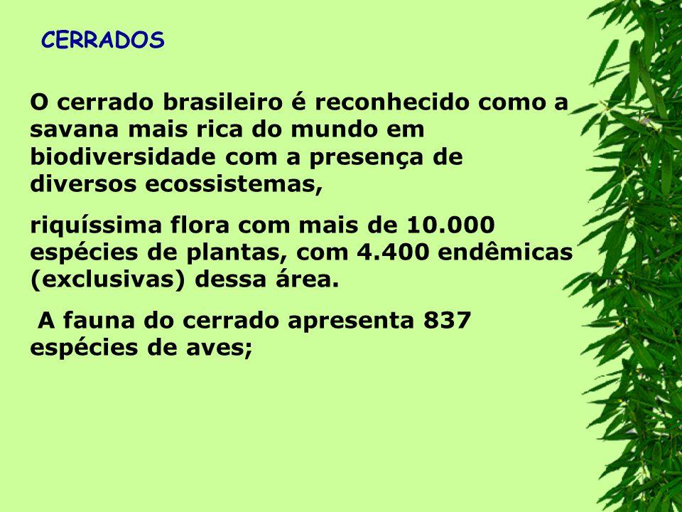 CERRADOS O cerrado brasileiro é reconhecido como a savana mais rica do mundo em biodiversidade com a presença de diversos ecossistemas,