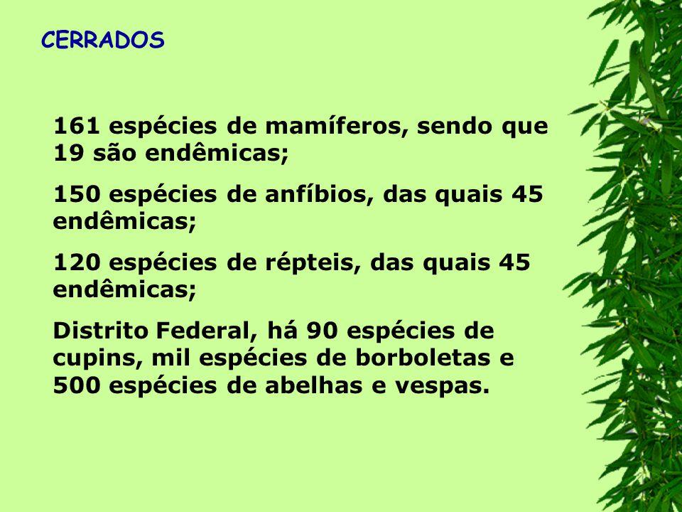 CERRADOS 161 espécies de mamíferos, sendo que 19 são endêmicas; 150 espécies de anfíbios, das quais 45 endêmicas;