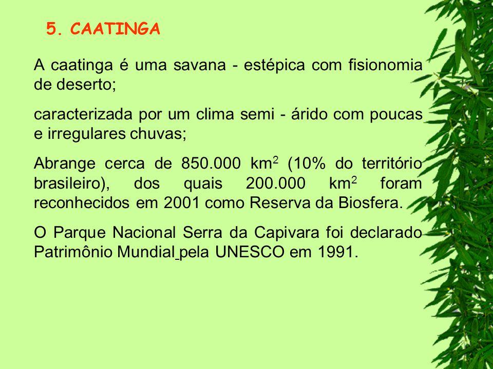 5. CAATINGA A caatinga é uma savana - estépica com fisionomia de deserto; caracterizada por um clima semi - árido com poucas e irregulares chuvas;