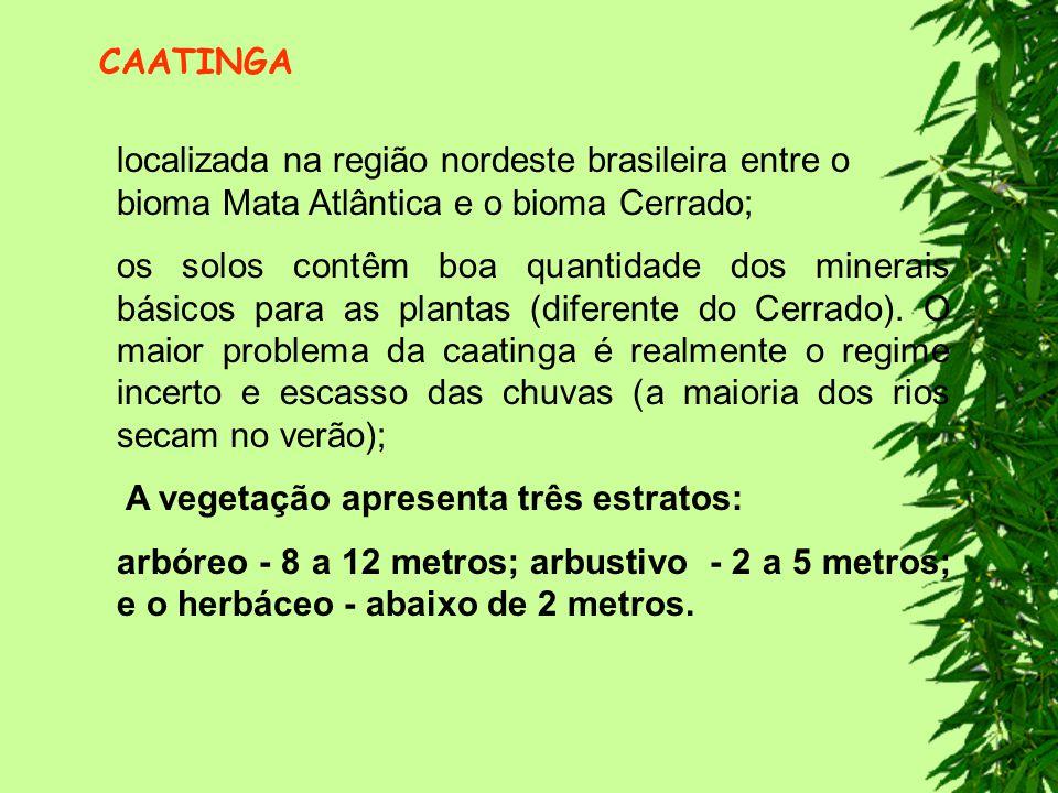 CAATINGA localizada na região nordeste brasileira entre o bioma Mata Atlântica e o bioma Cerrado;