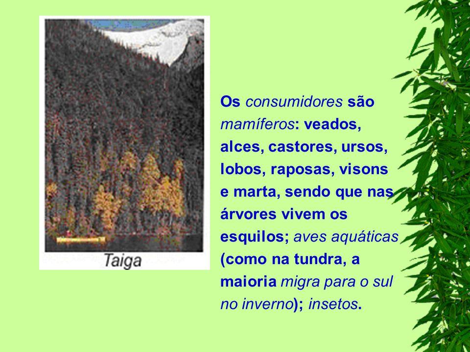 Os consumidores são mamíferos: veados, alces, castores, ursos, lobos, raposas, visons e marta, sendo que nas árvores vivem os esquilos; aves aquáticas (como na tundra, a maioria migra para o sul no inverno); insetos.