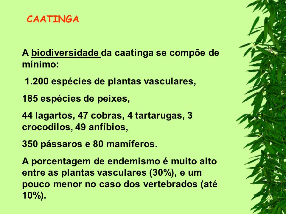 CAATINGA A biodiversidade da caatinga se compõe de mínimo: 1.200 espécies de plantas vasculares, 185 espécies de peixes,