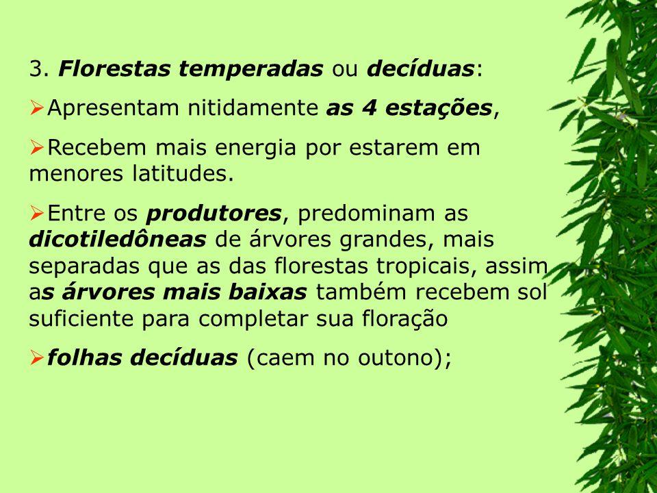 3. Florestas temperadas ou decíduas: