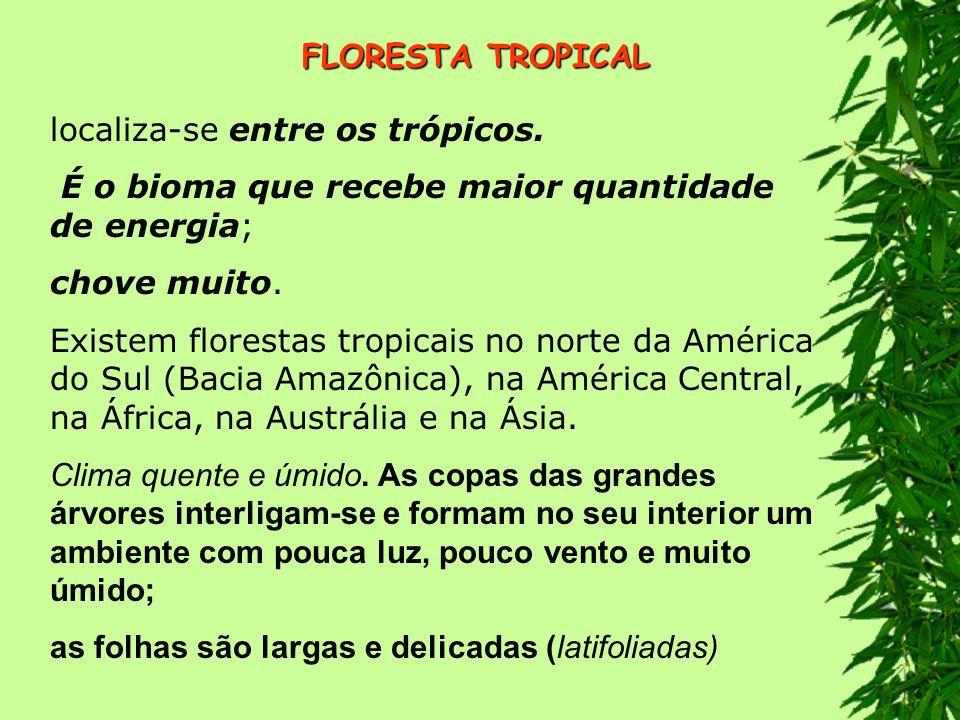 FLORESTA TROPICAL localiza-se entre os trópicos. É o bioma que recebe maior quantidade de energia;