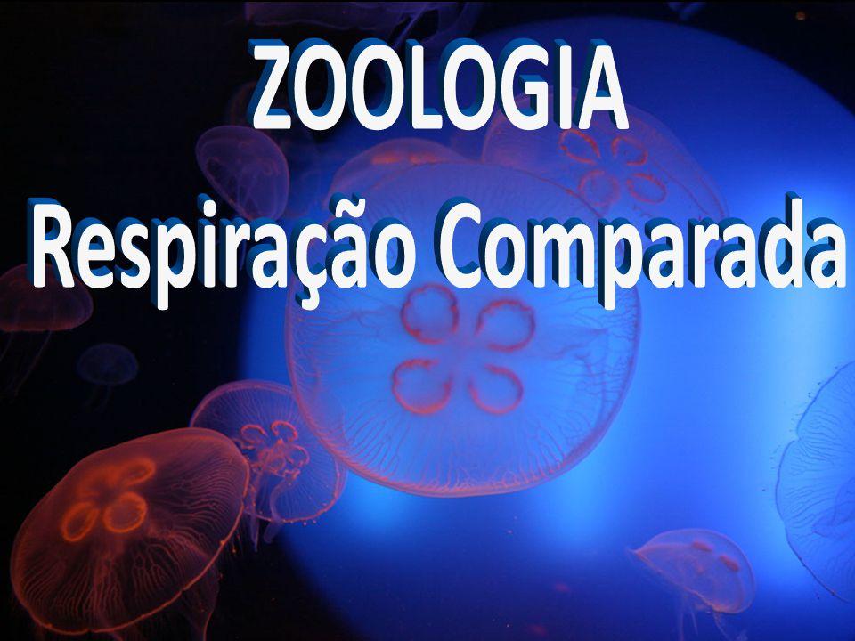 ZOOLOGIA Respiração Comparada